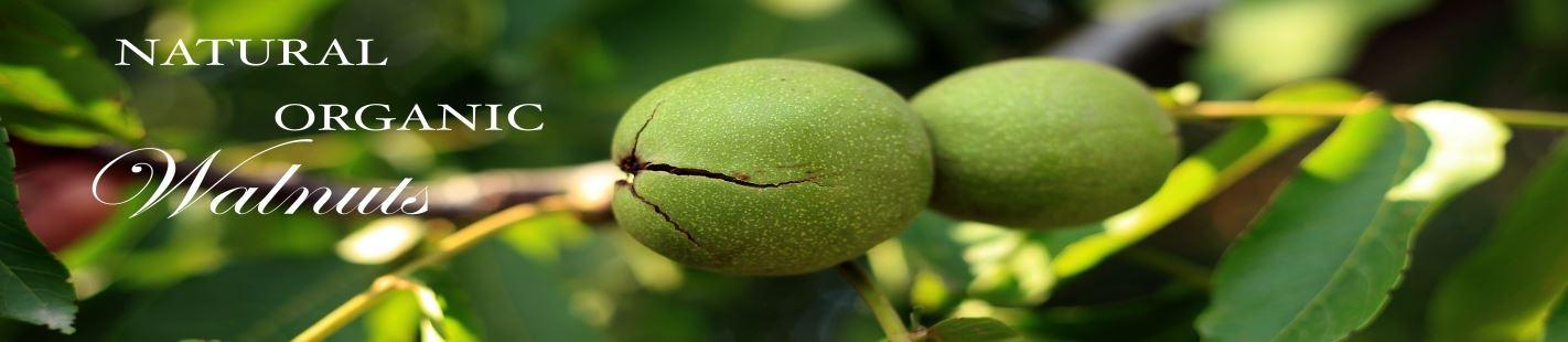 organic-walnuts